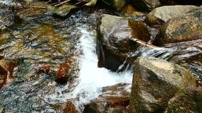 Видео природы, водопад a малый в лесе подача воды через утесы после дождя Водопад спрятанный в лесах  видеоматериал