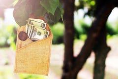 100 видов долларовых банкнот на дереве Стоковая Фотография RF