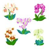 5 видов орхидей Стоковое Фото
