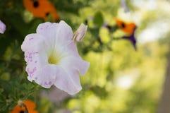 Виды белого цветка над землей Стоковое Изображение RF