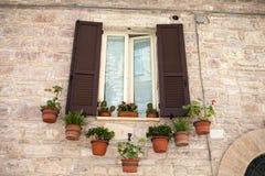 Виды цветков на окне Стоковое Изображение RF