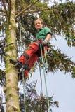 Виды Arborist на взбираясь веревочке в дереве Стоковая Фотография RF