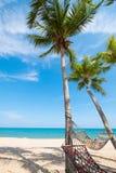 Вид гамака на пальме Стоковые Фотографии RF