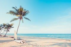Вид гамака на пальме Стоковые Фото
