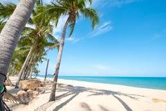 Вид гамака на пальме Стоковая Фотография