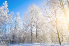 Вид зимы покрытых снег ветвей дерева против голубого ясного морозного неба Стоковое фото RF