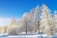 Вид зимы покрытых снег ветвей дерева против голубого ясного морозного неба Стоковое Фото
