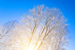 Вид зимы покрытых снег ветвей дерева против голубого ясного морозного неба Стоковые Фото