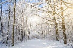 Вид зимы покрытых снег ветвей дерева против голубого ясного морозного неба Стоковые Изображения