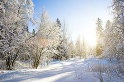 Вид зимы покрытых снег ветвей дерева против голубого ясного морозного неба Стоковые Изображения RF