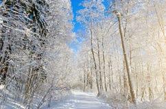 Вид зимы покрытых снег ветвей дерева против голубого ясного морозного неба Стоковые Фотографии RF