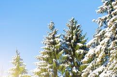 Вид зимы покрытых снег ветвей дерева против голубого ясного морозного неба Стоковое Изображение RF