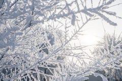 Вид зимы покрытых снег ветвей дерева против Стоковые Изображения RF