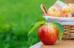 Вид красных и желтых зрелых яблок торжественный на деревянной предпосылке стоковые изображения