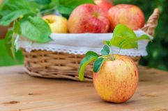 Вид красных и желтых зрелых яблок торжественный на деревянной предпосылке стоковые изображения rf
