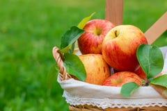 Вид красных и желтых зрелых яблок торжественный на деревянной предпосылке стоковые фотографии rf