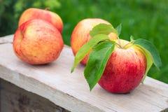 Вид красных и желтых зрелых яблок торжественный на деревянной предпосылке стоковое изображение
