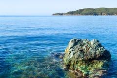 Вид на море от горы Дерево растет около воды адриатическое море Стоковое фото RF