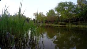 Вид на озеро и утки видеоматериал