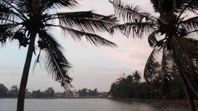 Вид на озеро, кокосовые пальмы, влажные небеса, дуя деревья стоковые фотографии rf