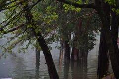 Вид на озеро отдыхает люди, вода жизнь Стоковое Изображение RF