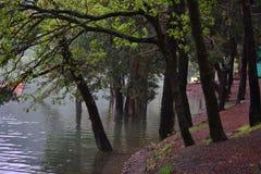 Вид на озеро отдыхает люди, вода жизнь Стоковые Фото
