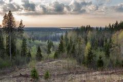 Вид от горы, древесины весны Стоковое Изображение RF