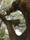 Вид папоротника на дереве стоковое изображение rf