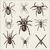Вид паука или паукообразные, большинств опасные насекомые в мире, старый год сбора винограда на хеллоуин или дизайн фобии вычерче иллюстрация вектора