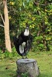 вид птицы Стоковое Изображение