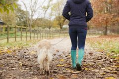 Вид сзади зрелой женщины на прогулке осени с Лабрадором Стоковые Изображения