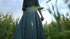 Вид сзади низкого угла Маленькая девочка в свободном зеленом платье неторопливом идет вдоль зеленого поля пшеницы r акции видеоматериалы