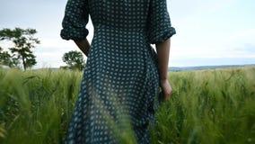 Вид сзади низкого угла Молодая белокурая девушка в свободном зеленом платье неторопливом идет вдоль зеленого поля пшеницы _ сток-видео