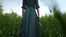 Вид сзади низкого угла Молодая белокурая девушка в свободном зеленом платье неторопливом идет вдоль зеленого поля пшеницы _ акции видеоматериалы