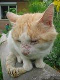 вид спереди кота Стоковое Изображение