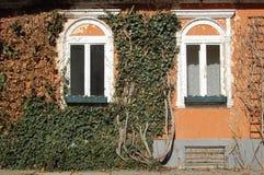 Вид спереди фасада здания покрытого зелеными листьями стоковое изображение rf