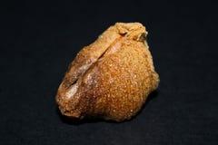 Вид спереди ootheca богомола изолированного на черной предпосылке Стоковое Изображение