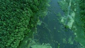 Вид с воздуха болота зеленого цвета святилища резервирования парка сток-видео