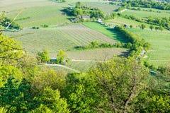 Вид с воздуха виноградников Стоковые Изображения RF
