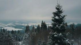 Вид с воздуха гор зимы покрытых с соснами Горы на снежный день, красота живой природы сток-видео