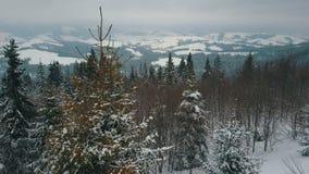Вид с воздуха гор зимы покрытых с соснами Горы на снежный день, красота живой природы акции видеоматериалы
