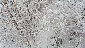 Вид с воздуха двигать за снежными верхними частями дерева над лесом в зиме сток-видео