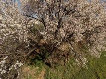 Вид с воздуха дерева весны цвести во дворе видеоматериал