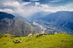 Вид с воздуха долины Kullu с лошадями на переднем плане Стоковые Изображения