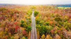 Вид с воздуха дороги в лесе осени на заходе солнца Изумительный landscap Стоковые Изображения