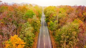 Вид с воздуха дороги в лесе осени на заходе солнца Стоковые Фото
