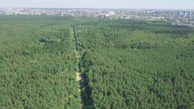 Вид с воздуха дороги в лете окруженной зажимом леса сосны Взгляд сверху дороги в лесе Стоковые Фото