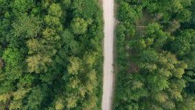 Вид с воздуха дороги леса акции видеоматериалы