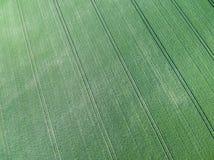 Вид с воздуха зеленого поля зерна Стоковое Фото