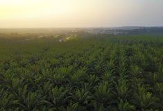 Вид с воздуха зеленой плантации ладони во время восхода солнца Стоковые Изображения